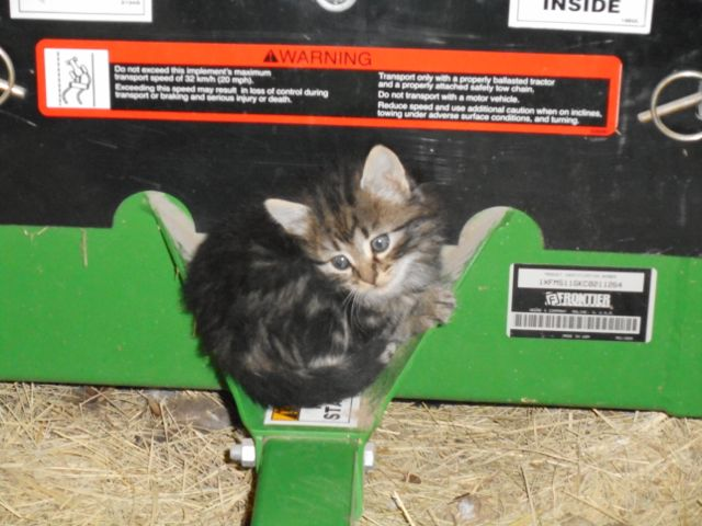 Kitten snuggled on a tractor implement.
