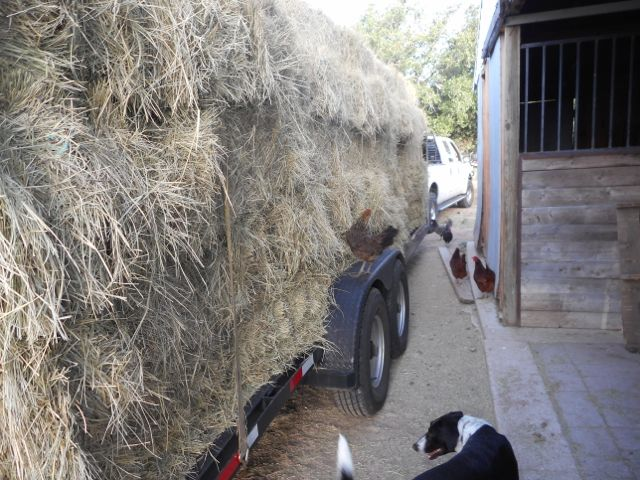 We have lots of helpers to inspect the hay  as we unload and load.