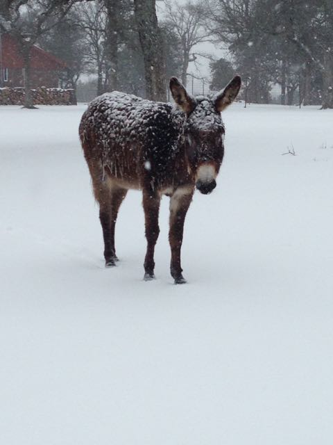 Pablo the donkeycicle. Brrrrrrrrr!
