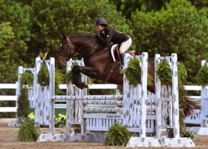Another pic of Cartier R showing in the hunter ring