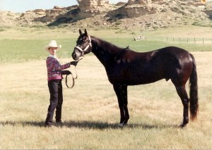 My second AQHA show horse: Hesa Black Associate