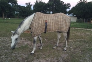Sterling's dapper Baker fly sheet