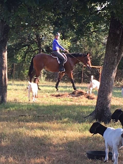 Learning to go forward among the goat menagerie