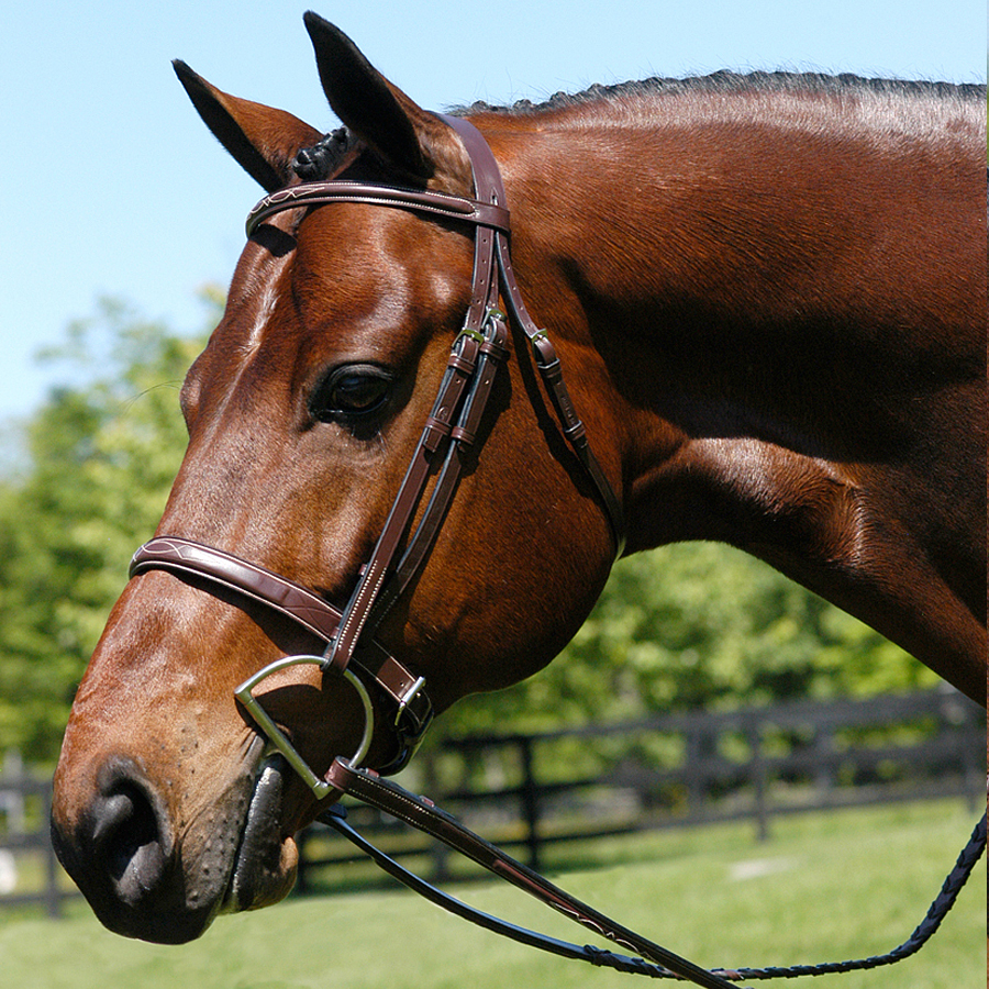 Bevel Heritage Wide Caveson Hunter Bridle. Photo from Beval website.