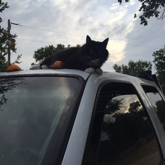 Marby never ceases to entertain. Never. He also likes to hang out on the tops of vehicles of all kinds as well as buildings.