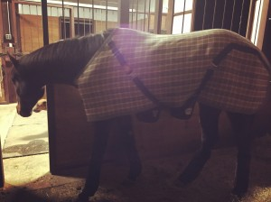 Simon snug in his blanket and and all wrapped up in his Back on Track wraps.